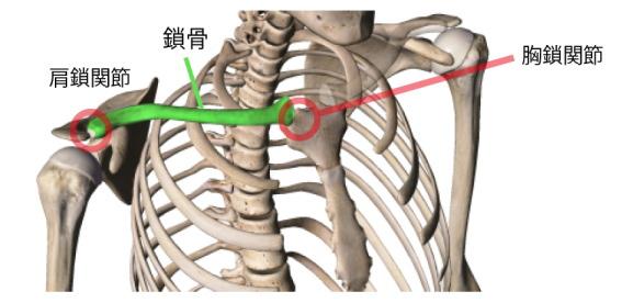 胸鎖関節の亜脱臼と四十肩、五十肩の説明画像