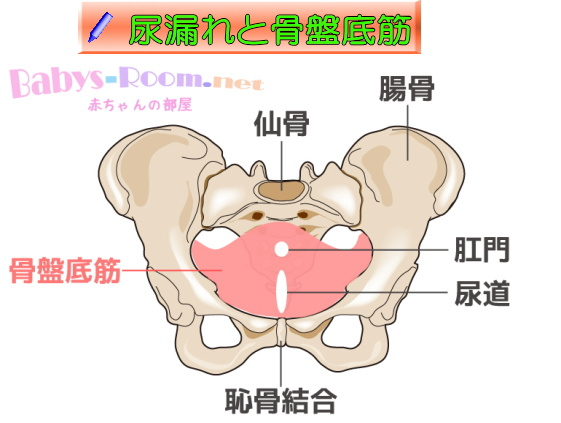 盛岡 尿漏れと骨盤底筋について 整体
